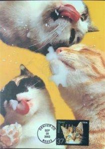 HNLP Hideaki Nakano Greeting Card Spay Neuter 3670 Cat Happy Birthday Milk it