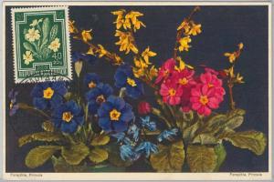 56940 - AUSTRIA - POSTAL HISTORY: MAXIMUM CARD 1955 - FLOWERS