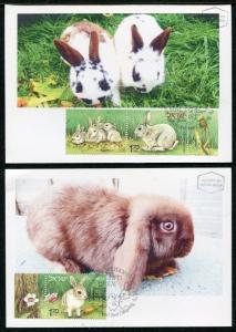 Israel Domestic Animals offspring Cat Rabbit Poultry Eggs  Maxi Mximum Card 2010