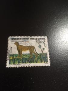 Cameroun sc 824 uhr ANIMAL
