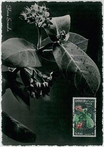 MAXIMUM CARD : nature FLOWERS  -  SOMALIA 1955 # 4