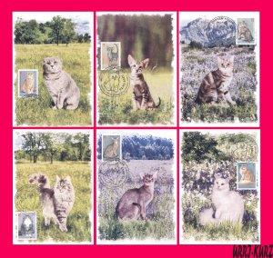 TRANSNISTRIA 2017 Nature Fauna Farm Domestic Animals Pets Cats 6 MaxiCards