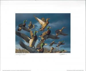 OREGON #17 2000 STATE DUCK STAMP PRINT Reg Ed + 2 stamps by Robert Steiner