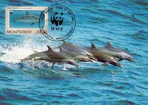 Montserrat 1990 Maxicard Sc #756 $3.50 Atlantic spotted dolphin WWF