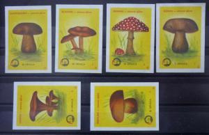 Match Box Labels! flora flower flowers nature mushrooms yugoslavia GJ23