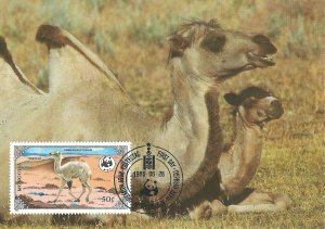 Mongolia 1446   FDC   World Wildlife Fund   Camel   Mint NH VF 1990   PD
