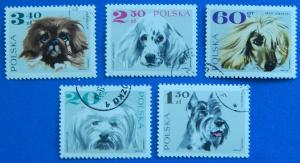 Dogs, Europe, Poland, №57-T