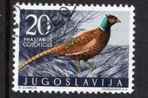 Yugoslavia  #499 1958  used  game birds  20d  pheasant
