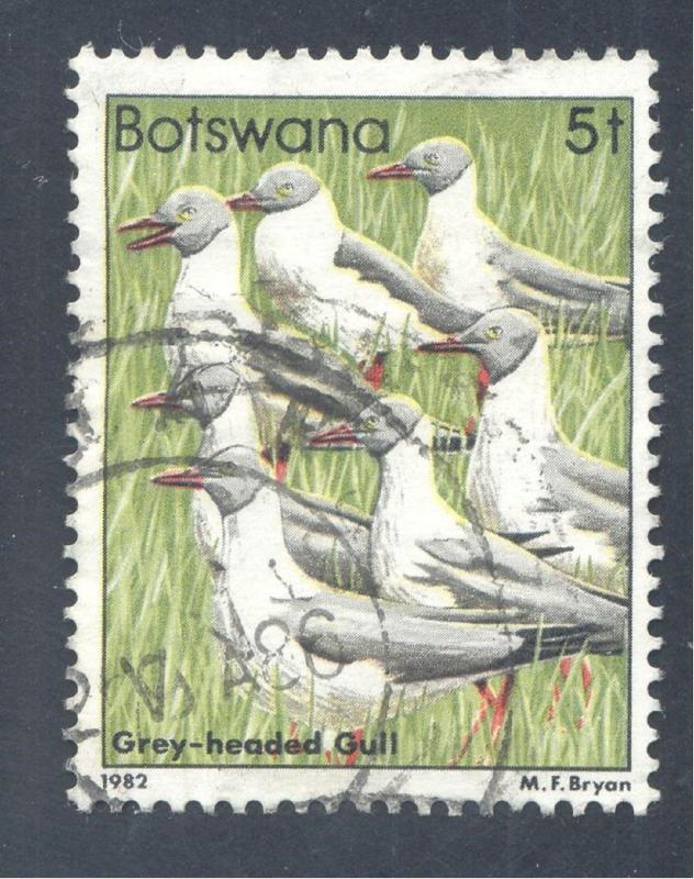 Birds: Grey-headed Gulls (Larus cirrocephalus), 1982 Botswana, Scott #307