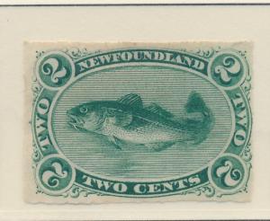 Newfoundland (Canada) Stamp Scott #38, Unused, Mint No Gum - Free U.S. Shippi...