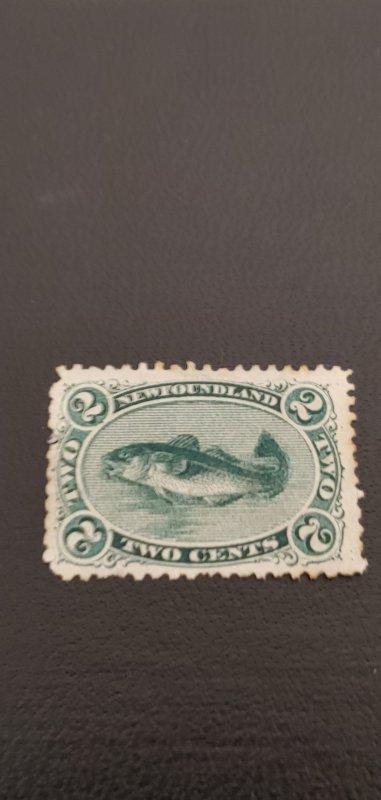 New Foundland #24 M partial gum