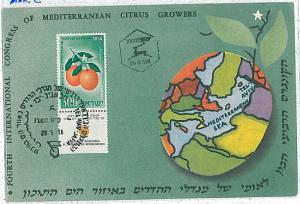 MAXIMUM CARD: FRUIT \ ORANGES : 1956 - ISRAEL