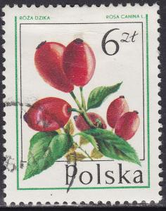 Poland 2206 USED 1977 Forest Fruit Dog Rose 6.00zł
