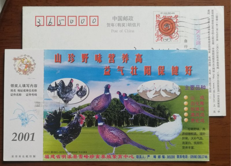 Wild chicken,pheasant,Guinea fowl,CN01 Mingxi Rare Bird Breeding Farm advert PSC