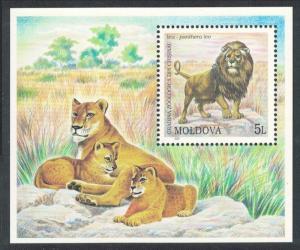 Moldova Lion Lioness cubs Chisinau Zoo MS SG#MS402