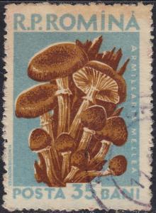Romania - 1958 - Scott #1229 - used - Mushroom
