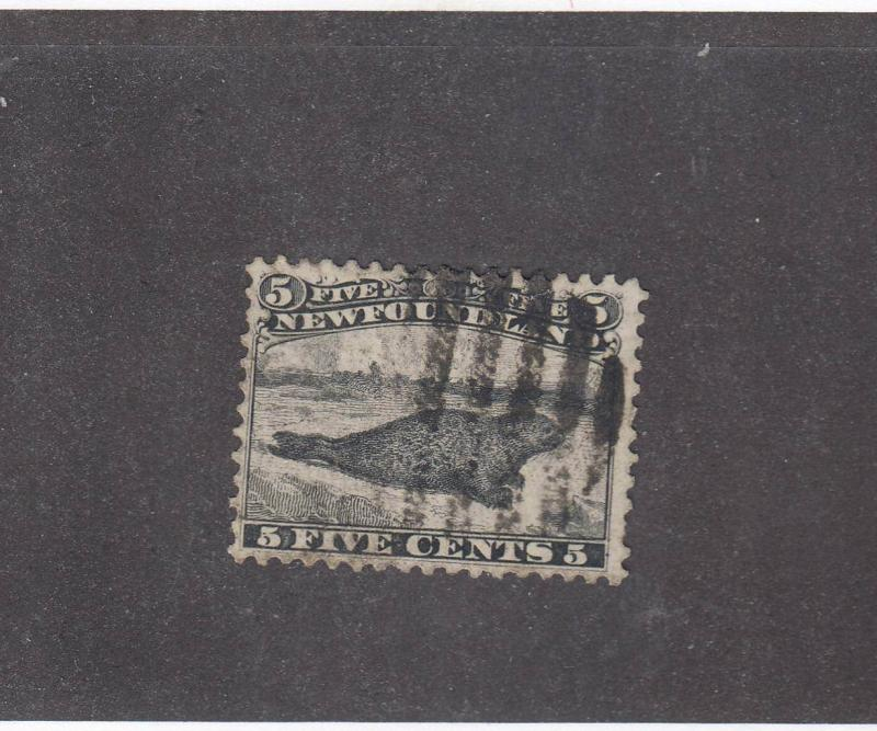 NEWFOUNDLAND # 26  VF USED  5cts    HARP SEAL BLACK GRID CANCEL  CAT VALUE $250