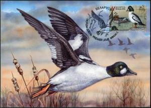 Belarus. 2016. Common goldeneye (Mint) Maximum Card