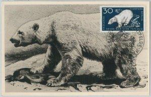 52552 - GERMANY DDR - POSTAL HISTORY -MAXIMUM CARD - 1959  ANIMALS:  POLAR BEAR
