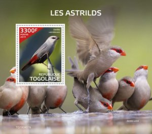 Togo Stamps 2019 .-- Waxbills (Estrilda caerulescens). Block. Imperf.