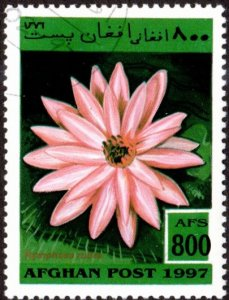 Afghanistan sw1771 - Cto - 800af Pink Water Lily (1997)