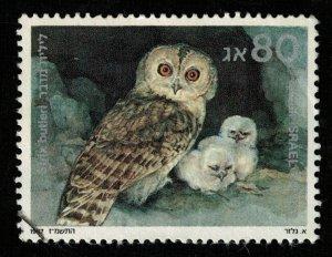 Bird Israel (TS-2097)