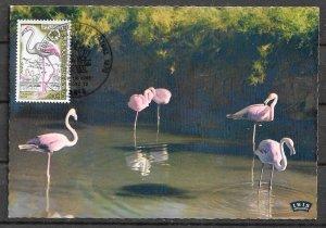 FRANCE STAMPS, 1996, MAXI CARD MC MAXIMUM CARD PINK FLAMINGO