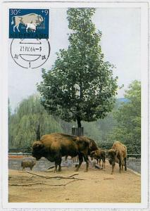 MAXIMUM CARD - POSTAL HISTORY - Netherlands : Buffalos, Wild Fauna, 1964