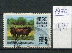 266193 CEYLON 1970 year used stamp Wild buffalo