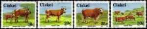 Ciskei - 1987 Nkone Cattle Set MNH** SG 111-114