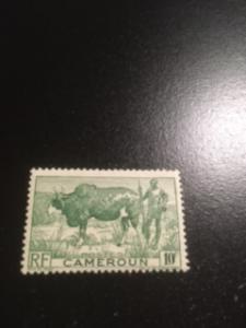 Cameroun sc 304 MH