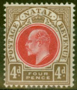 Natal 1902 4d Carmine & Cinnamon SG133 Fine & Fresh Lightly Mtd Mint