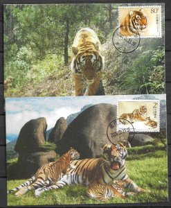 CHINA STAMPS 2004, SET OF 2 MAXI CARDS MC MAXIMUM CARDS SOUTH CHINESE TIGER