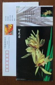 Zhilongjv Chrysanthemum petal orchid,CN01 baoshan famous orchid varieties PSC