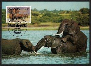 Uganda WWF African Elephants MATING Maxicard