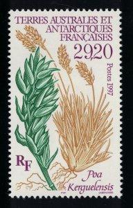 FSAT TAAF 'Poa kerguelensis' Plant 1997 MNH SG#373 MI#367 CV£25.-