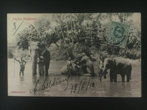 1910 Ceylon RPPC postcard Cover to Tonkin Vietnam Elephants in River