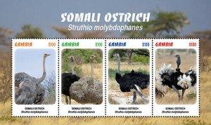 2020/11-GAMBIA - SOMALI OSTRICH    4V  complet set    MNH ** T