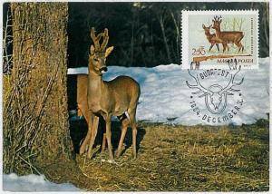 MAXIMUM CARD - POSTAL HISTORY -  Hungary: Deers, Hunting, Fauna, 1964