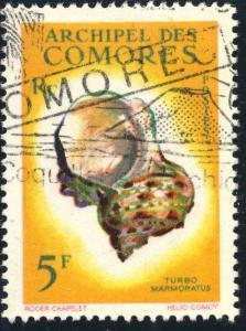 COMORES - 1962 - Yv.22/Mi.45 5fr Turbo Marmoratus - Obl. TB