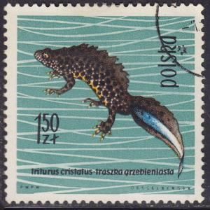 Poland 1141 USED 1963 Crested Newt