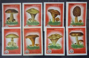 Match Box Labels! flora flower flowers nature mushrooms yugoslavia GJ26