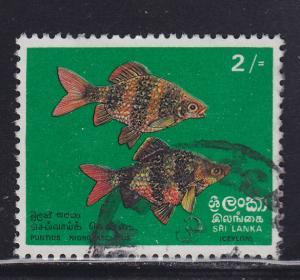 Sri Lanka 476  Black Ruby Barbs 1972