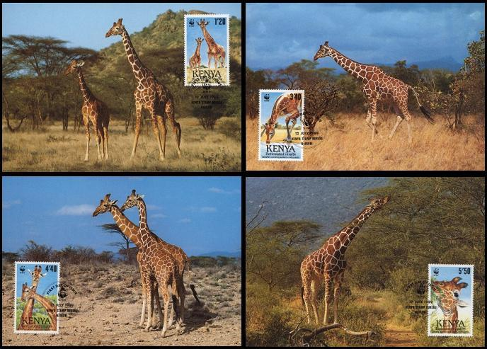 Kenya WWF Reticulated Giraffe 4 official Maxicards