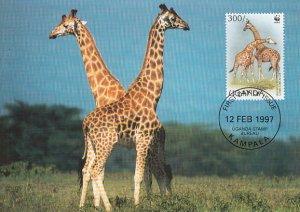 Uganda 1997 Maxicard Sc #1469b 300sh Rotschild's giraffe WWF