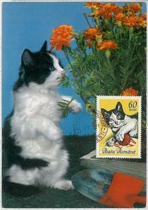 MAXIMUM CARD - Animals CATS CAT : ROMANIA 1965  #3