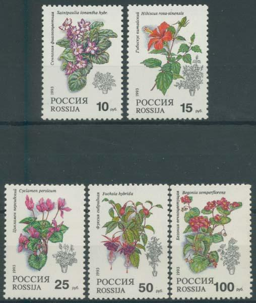 Russia 1993 Sc 6133-7 Flora Flower Plant Bloom Stamp MNH