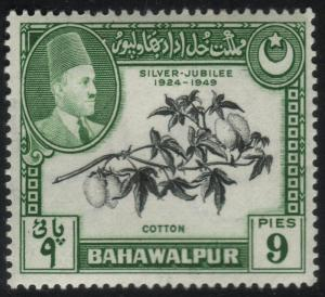 Bahawalpur #24 - Cotton - MLH