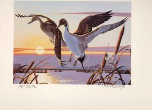 CALIFORNIA #10 1980 STATE DUCK STAMP PRINT PINTAILS  Walter Wolfe  Artist Proof