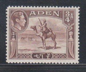 Aden,  3/4a Camel Corpsman (SC# 17) MH